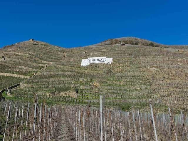 【マニアックすぎるワイン講座】テロワール蘊蓄! コート・ロティの土壌ホントの話